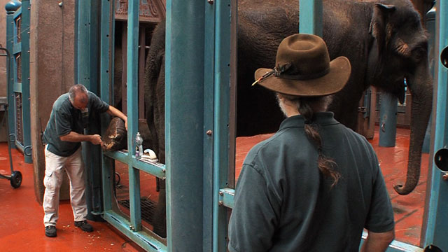 CityStream: Elephants in Captivity