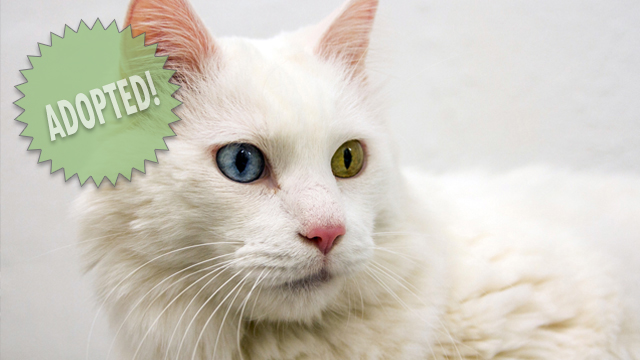 CityStream Pet of the Week: Kit Kat 12/3/2015