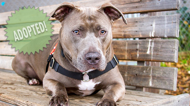 CityStream Pet of the Week: Honey Boo