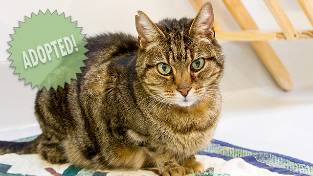 CityStream Pet of the Week: Purrrsia