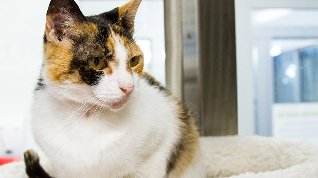 CityStream Pet of the Week: Pumpkin