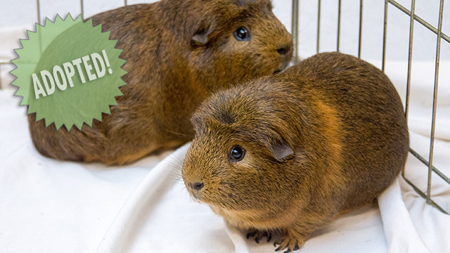 CityStream Pet of the Week: Teddy & William