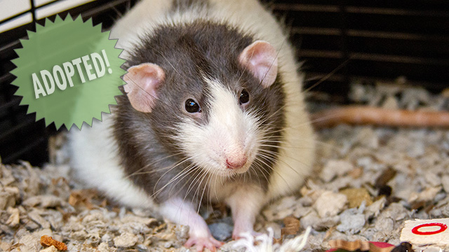 CityStream Pet of the Week: Mischief