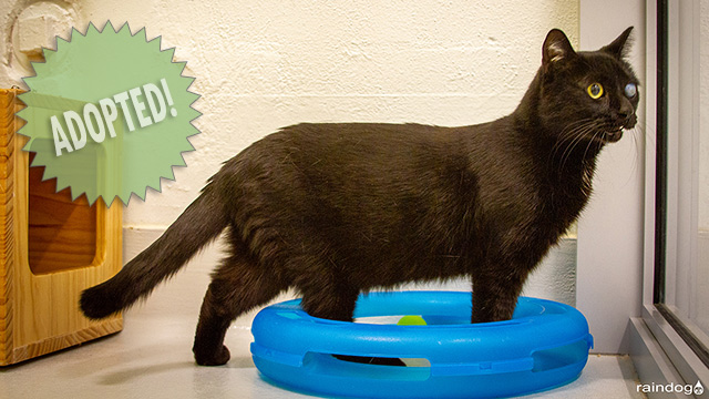 CityStream Pet of the Week: Odin