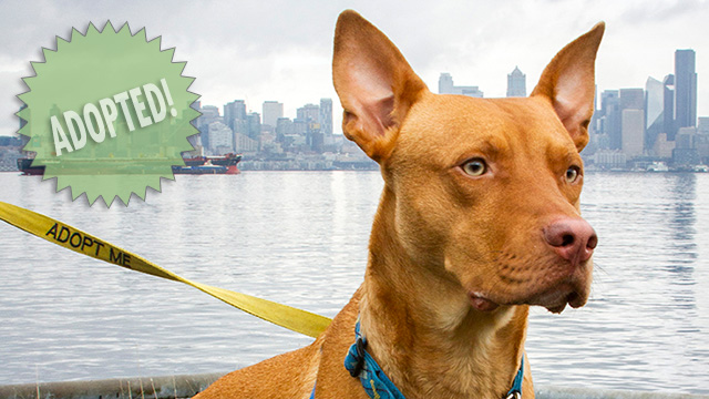 CityStream Pet of the Week: Buddy