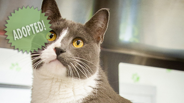 CityStream Pet of the Week: Alu