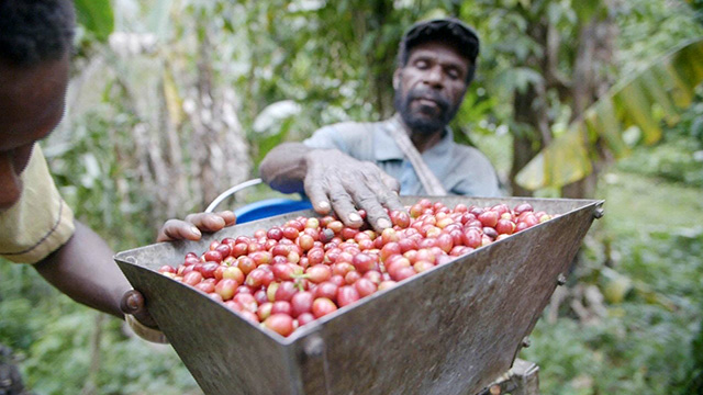 CityStream: Papua New Guinea: From Bean to Cup