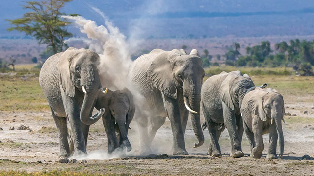 Preserving Elephants in the Age of Extinction