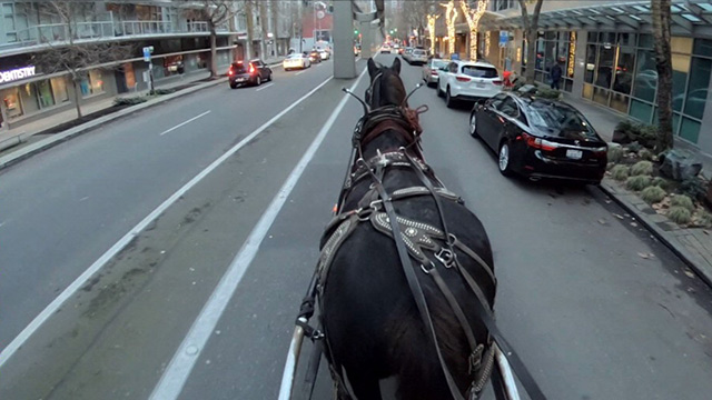 CityStream: Seattle's Last Carriage Ride Operator